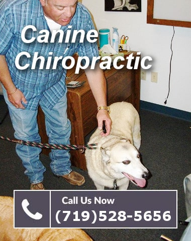 the well adjusted dog canine chiropractic methods you can do